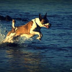Dolfijnen honden sprong in het water