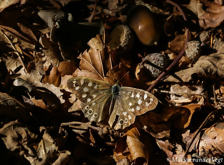 Vlinder mij - &#039;vlinder mij<br /> vlinder mij<br /> zie mij<br /> troost mij<br /> gedenk mij<br /> laat mij<br /> heel <br /> voorzichtig