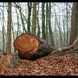 Bosbouw