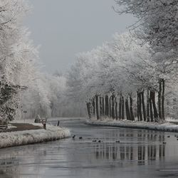 Winter langs de Tjonger