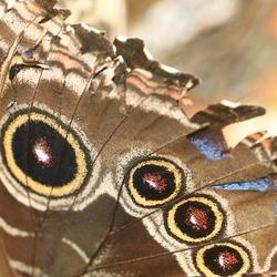 Detail vleugel (2779)