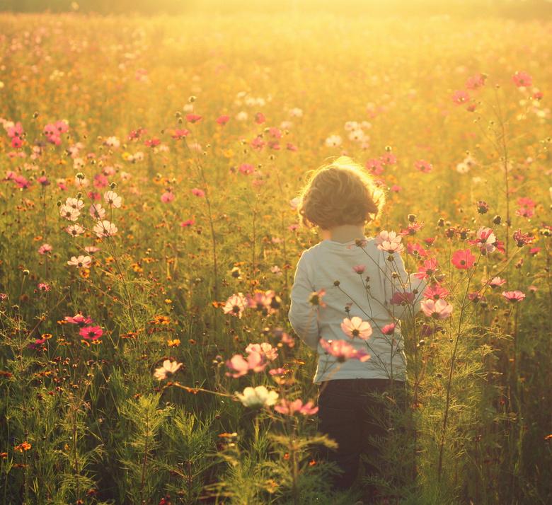 field of dreams - Jongetje in een bloemenveld met avondzon