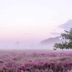 Misty Morning - Veluwe, Holland