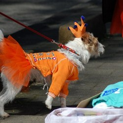 Queensdogday!!