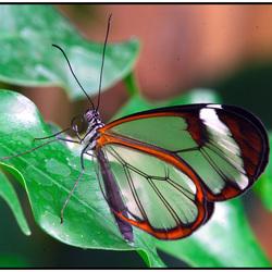 *Vlinders aan de Vliet