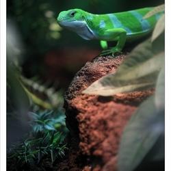 Groene jongen