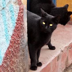 Straatkatten in Valparaiso, Chili