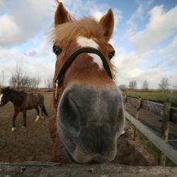 ons paardje