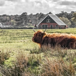 Natuurbos op Texel.
