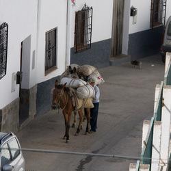 muilezels Alpujarras-5988.jpg