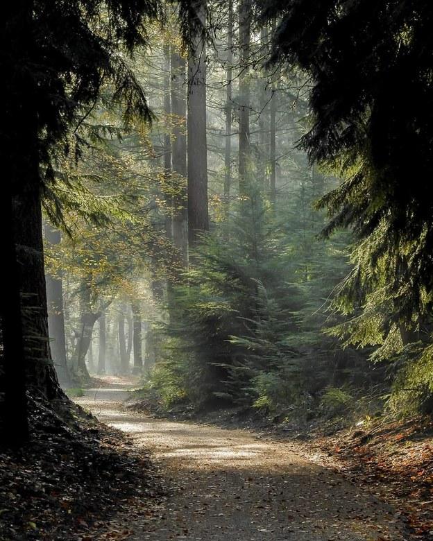 Het donker verlaten - Er zijn niet alleen dansende bomen in het Speulderbos.