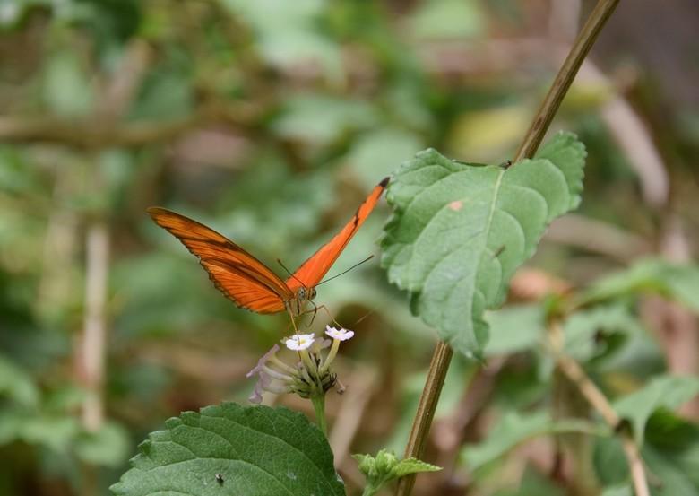 Little orange beauty - Vlinder vast kunnen leggen in de natuur op Gran Canaria .
