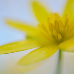 Gele lente