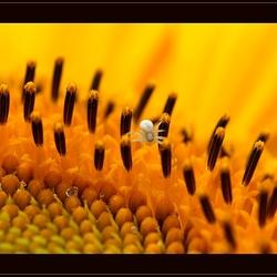 Little Spider in the Sun*