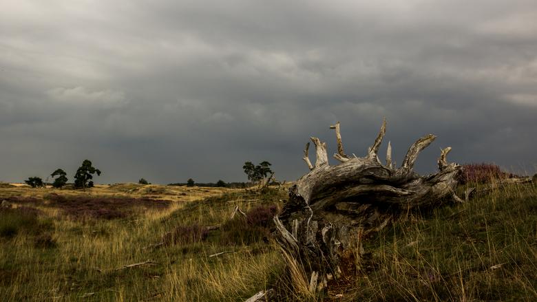 Landschap Hoge Veluwe - Donkere wolken boven de Hoge Veluwe.