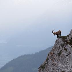 De koning van Zwitserland