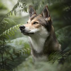 Wolfhond tussen de varens