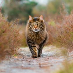 Thorgal de kat