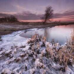 Arctische Biesbosch