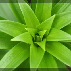 herhalend blad