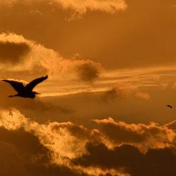 Fly away!!