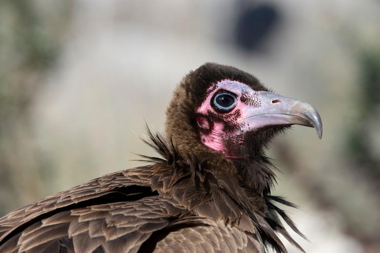Vogel -