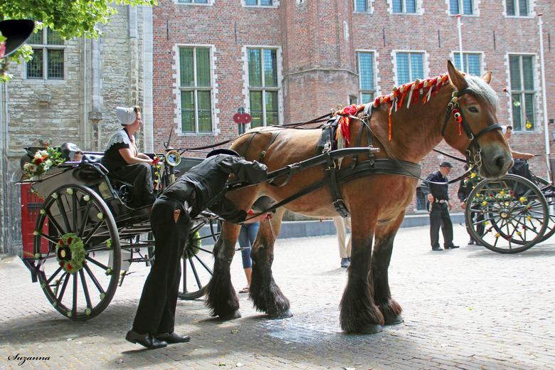 Tja ook een paard moet zijn melk kwijt kunnen - wat een toeval treffer...op de juiste tijd en plaats te zijn en dat je dan dit ziet.