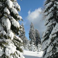Groene toekomst met witte sneeuw.