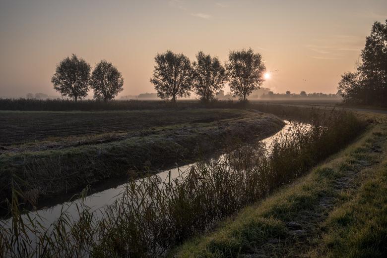 Mist landschap Rijnstrangen -