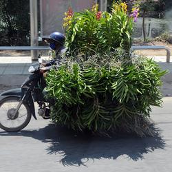 groenvervoer 1603208099m1W