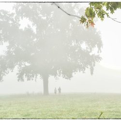 de mist ingaan