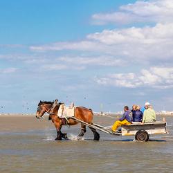 Garnalen vissen te paard