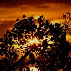 prachtig licht