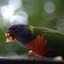 etende papegaai