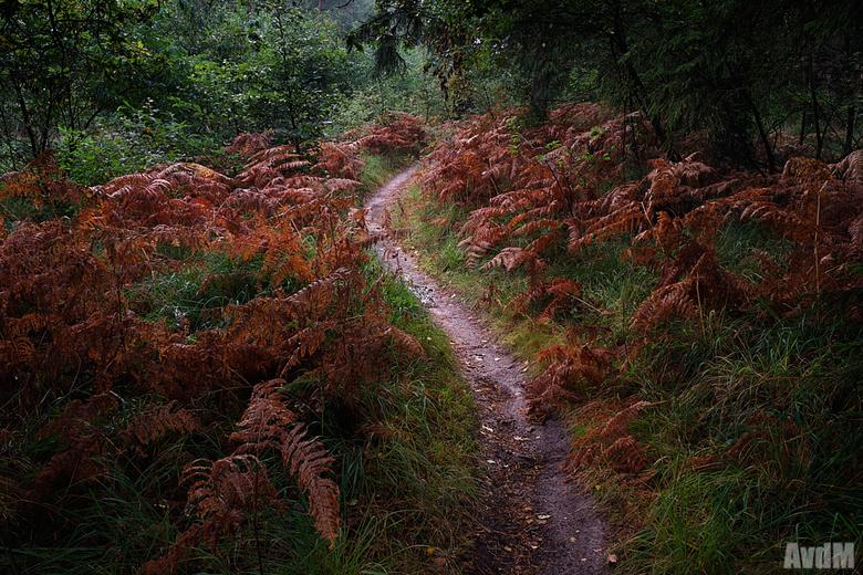 De herfst is begonnen - De herfst is weer begonnen, alles begint langzaamaan weer te verkleuren naar mooie rode, gele en oranje tinten.