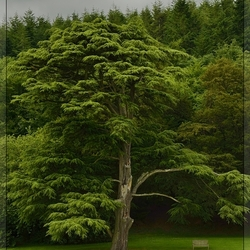 Tree at Old Wardour Castle