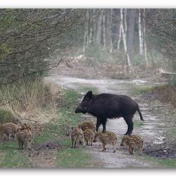 Moeder met haar gezinnetje