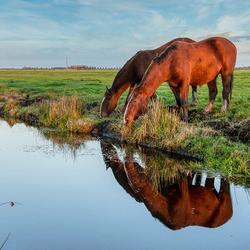 Paarden aan het grazen