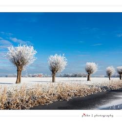 Wintersday
