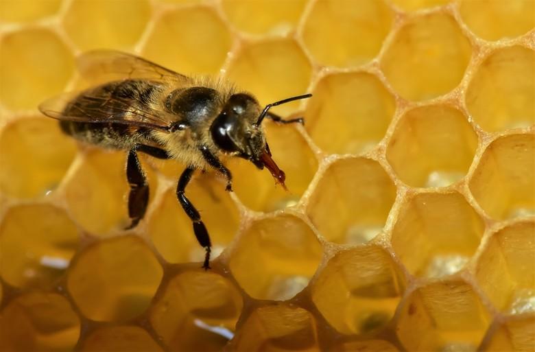 Bij op honingraat - Het Koetshuis in het Ledeboerpark in Enschede, is de bijenstal en verenigingslokaal van de NBV-Enschede.<br /> de vrijwilliger ge