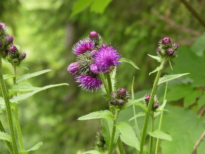 prachtige bloem - Wat kan de natuur toch mooi zijn in Oosterijk
