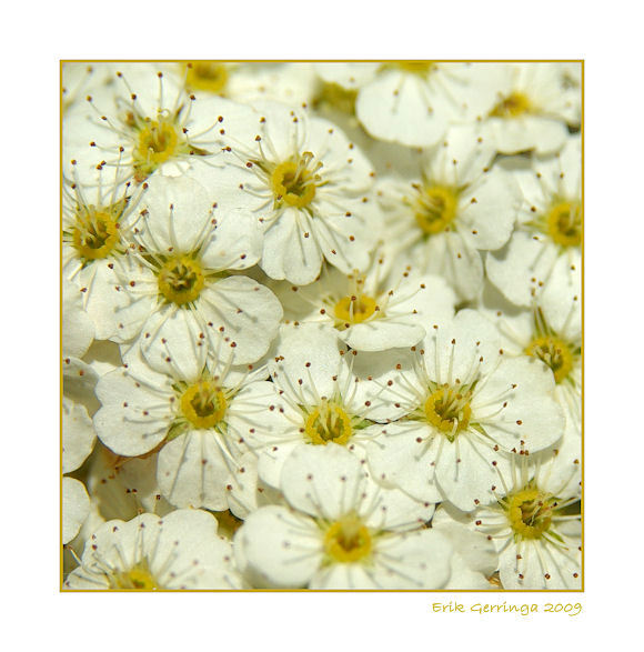 bloemetje -