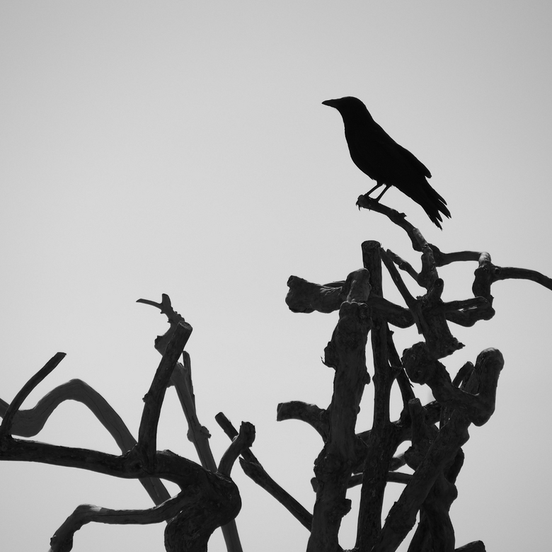 Uitkijk - Weet niet meer welke vogel dit was, maar door het tegenlicht ontstond er een mooi silhouette