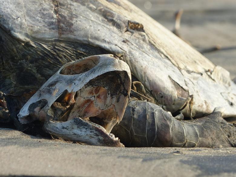 slachtoffer van een vissersnet