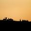 Zonsondergang tijdens de bronst