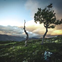 Trees to die