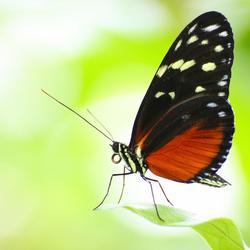 Artis-vlindertuin