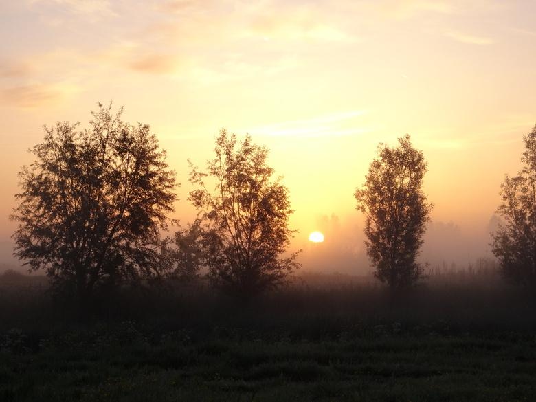 Ochtendzonnetje - Zonsopkomst tussen de bomen. Lansingerland