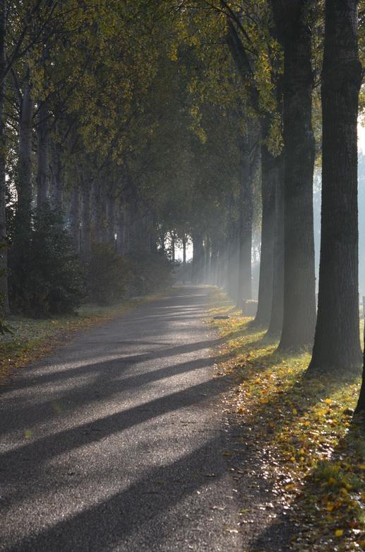 Herfst zon - Op een mooie landweg van Zevenaar naar Babberich scheen de zon zo prachtig door deze bomen die al een prachtige herfst kleur begon te kri