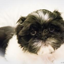 Pup van 8 weken oud